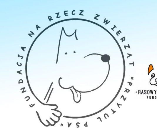 Psi wolontariat, fundacje