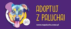 Adoptuj z Palucha