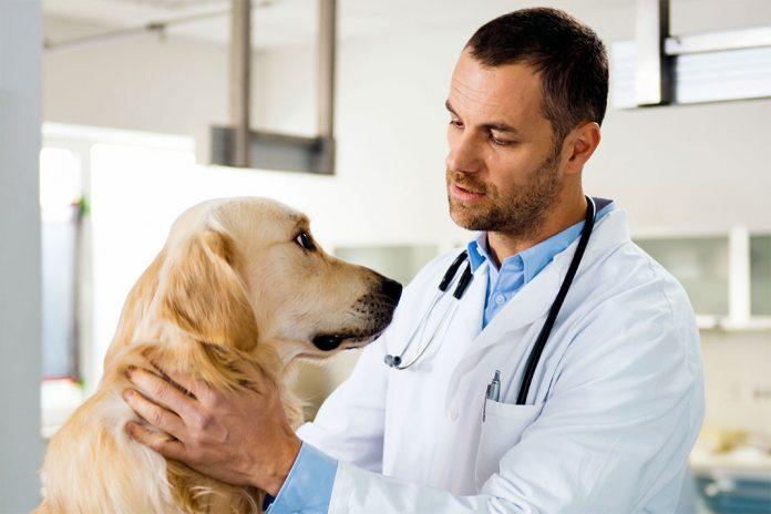 Oznakuj psa - gdy zaginie łatwiej trafi do domu