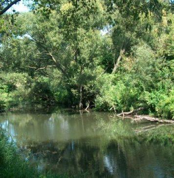 Rzeka Jeziorka