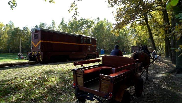 bryczka na polanie w Runowie
