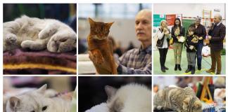 koty - wystawa 2018