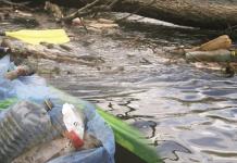 Sprzątanie Jeziorki