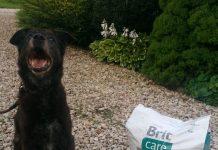 Pies Amor dziękuje za karmę. Foto: wolontariusze