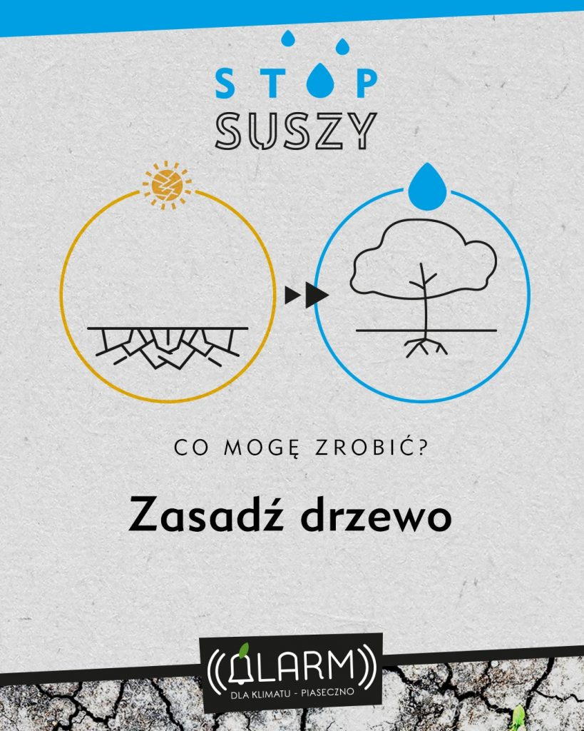 Zasadz-drzewo