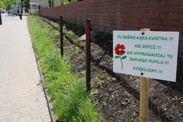 nowa łąka kwietna przy skrzyżowaniu Kościuszki i Sienkiewicza