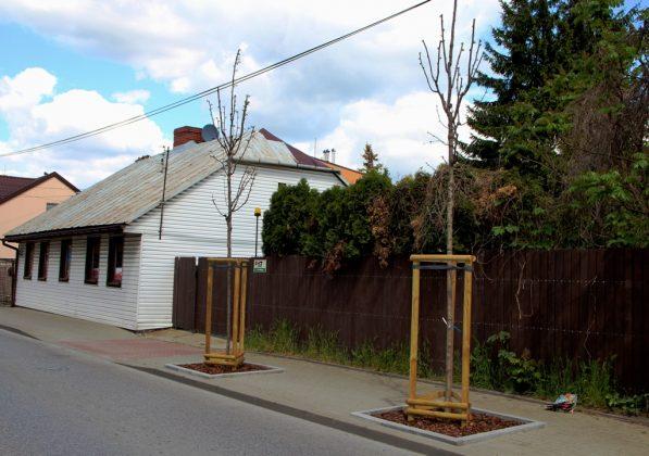 Nowe drzewa przy ul. Kilińskiego