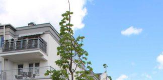 Nowe drzewa przy ul. Młynarskiej