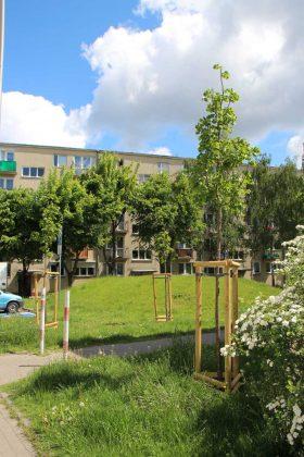 Nowe drzewa przy ul. Szkolnej w Piasecznie