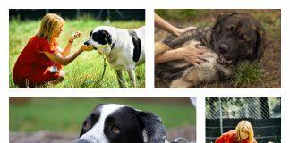 psy z Palucha do adopcji