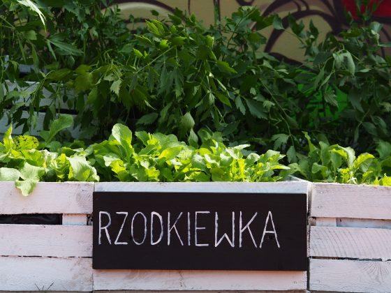 warzywniaczek przy ul. Fabrycznej