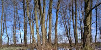 Środowisko mokradłowe, foto archiwum Chojnowskiego Parku Krajobrazowego