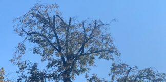 W drzewo w Parku Miejskim uderzył piorun