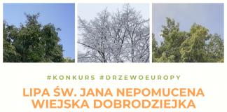 Ilustracja. Konkurs Europejskie Drzewo Roku