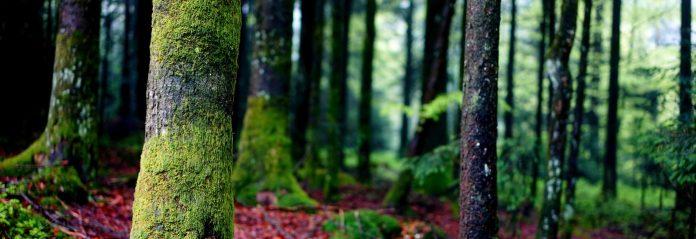 Kulturalni dla Ziemi - zdjęcie lasu