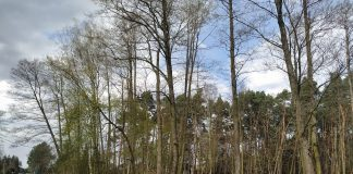 Las w Głoskowie - foto Alarm dla Klimatu Piaseczno