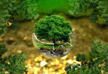 Weź udział w akcji Czyste Glinki – lokalnej akcji sprzątania świata