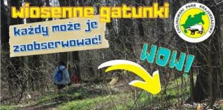 Wiosenne gatunki w Chojnowskim Parku Krajobrazowym