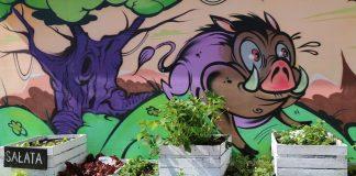 Ilustracja - skrzynki z sadzonkami ziół i warzyw na tle graffiti
