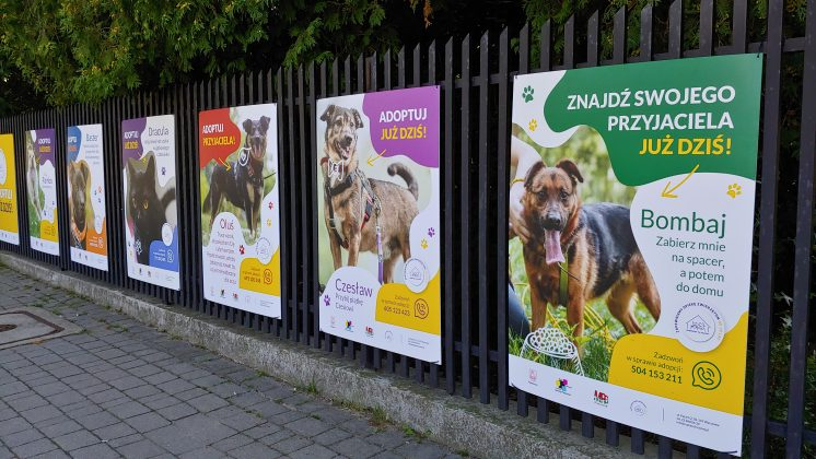 """Ilustracja. Wystawa """"Adoptuj zwierzaka"""""""