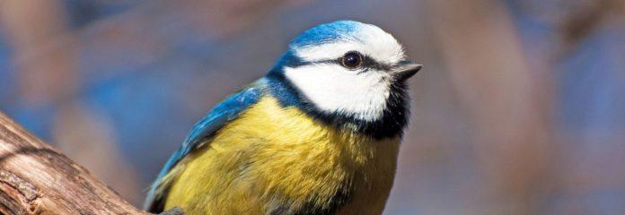Ilustracja. Ptaki naszych okolic - spacer