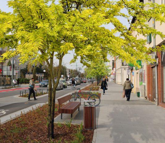 Nowe drzewa już niebawem ozdobią ulicę Puławską. na zdjęciu ulica Puławska z posadzonymi drzewami.